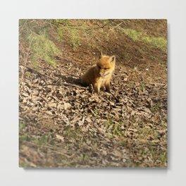 Baby fox kit Metal Print
