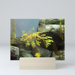 Leafy Sea Dragon with Rocks Mini Art Print