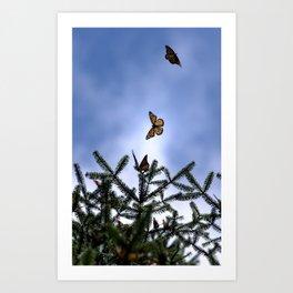 Monarchs flying Art Print