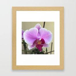 spring orchid Framed Art Print