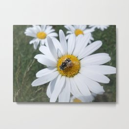 Busy As A... Bee Metal Print