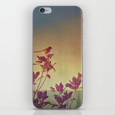 Mimus polyglottos in top of Magnolia Grandiflora iPhone & iPod Skin