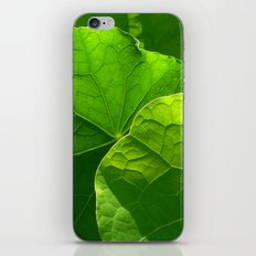nasturtium leaf iPhone & iPod Skin
