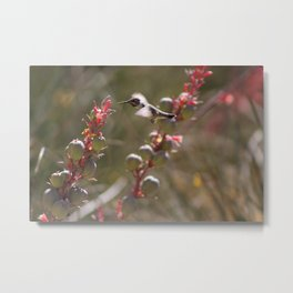 Hummingbird Flying To Red Yucca 2 in 3 Metal Print