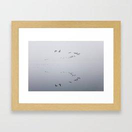Branta canadiensis Framed Art Print
