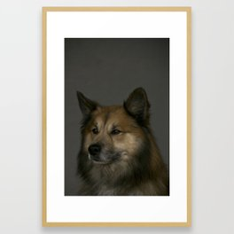 Finnish Lapphund animal portrait Framed Art Print