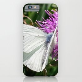 LARGE CABBAGE WHITE BUTTERFLY FEEDING ON KNAPWEED iPhone Case