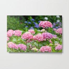 Pink & Lavender Flower Clusters Metal Print