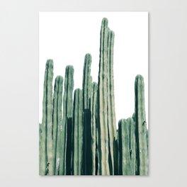 Cactus Line Canvas Print