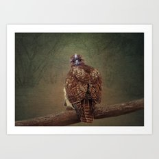 Young Red Tail Hawk Art Print