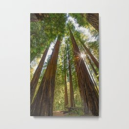 Majestic California Redwoods Metal Print