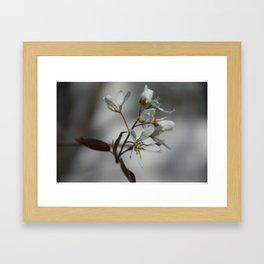 The fragile start of spring Framed Art Print