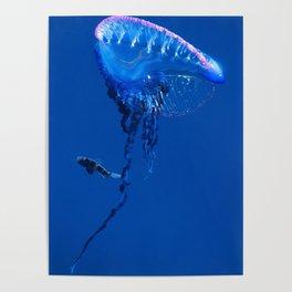 Fish and friend jellyfish Man O´War Poster