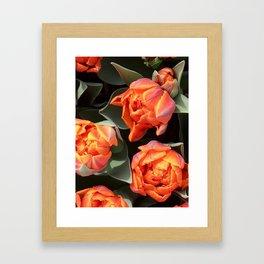 Tulips on fire Framed Art Print