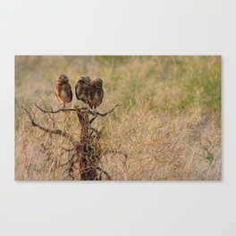 owls on the lookout Canvas Print