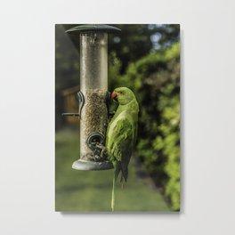 Urban Parakeet  Metal Print