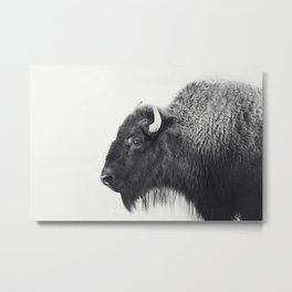 Buffalo Photograph in Black and White Metal Print