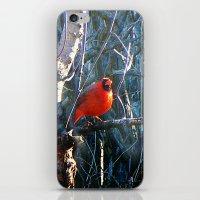 cardinal iPhone & iPod Skins featuring Cardinal by IcyBC