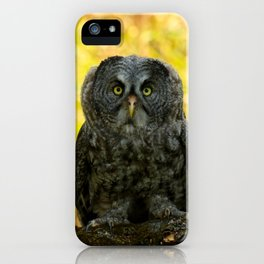 Owl Staring Contest iPhone Case