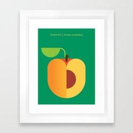Fruit: Apricot Framed Art Print