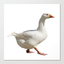Lovely Weather For Ducks Vector Canvas Print