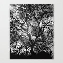 Dramatic London Tree Silhouette Canvas Print