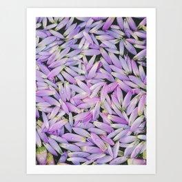 Purple Petal Pattern, Mirissa, Sri Lanka Art Print