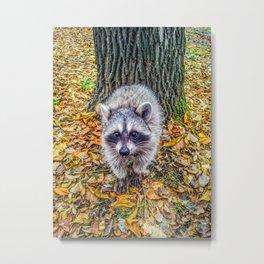 Walking on fallen leaves Metal Print