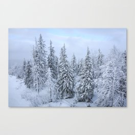 Snowy forest at the White Mountain Canvas Print
