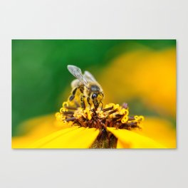A bee on the flower Canvas Print