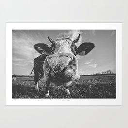 Inquisitive Cow Art Print