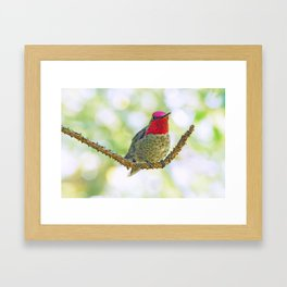 Anna's Hummingbird on a Twig Framed Art Print