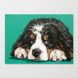 Cute Bernese Mountain Dog Puppy Pet Portrait Canvas Print