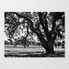 Under the Santa Rosa Sun Canvas Print