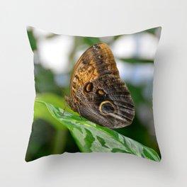 Owl Eye Butterfly by Teresa Thompson Throw Pillow