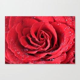 Red Swirl Rose Canvas Print