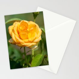 Beautiful Gold Medal Rose Stationery Cards