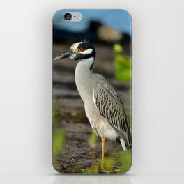 Yellow Crown Night Heron iPhone Skin