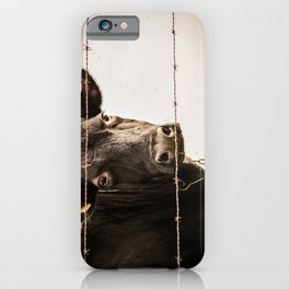 How Now, Brown Cow? iPhone Case