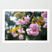 cherry blossoms in snow Art Print
