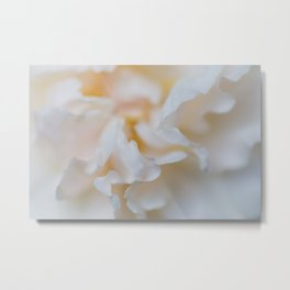 Rose - Flower Photography Metal Print