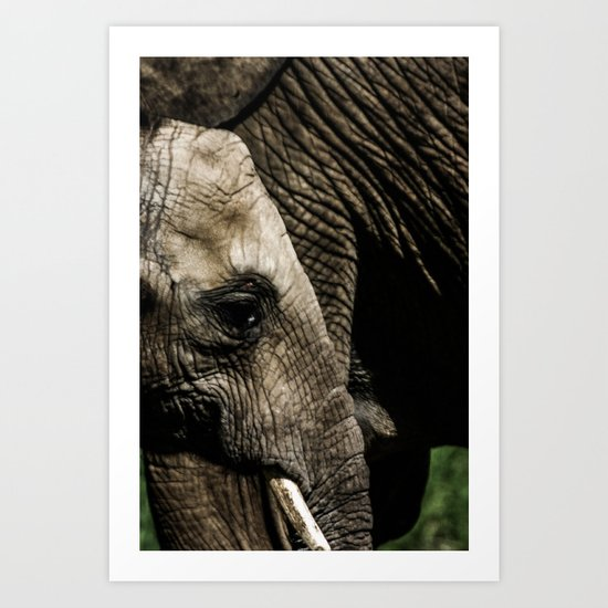 A baby elephant and his mother Art Print