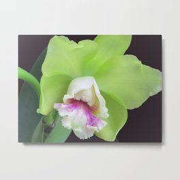 Green Cattleya Orchid Metal Print