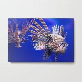 Grumpy Lion Fish in the Deep Blue Sea Metal Print