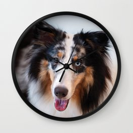 Cute sheltie dog resting Wall Clock