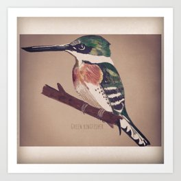 Green Kingfisher Art Print