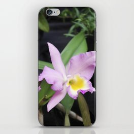 Cattleya Horace Maxima Orchid iPhone Skin