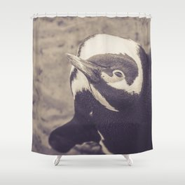 Adorable African Penguin Series 4 of 4 Shower Curtain