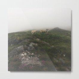 Highland Sheep Metal Print