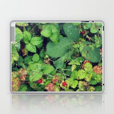 Blanketed Laptop & iPad Skin